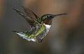 120px-Hummingbird-4