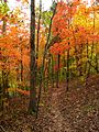 90px-Hall-bend-trail-foliage-tn1