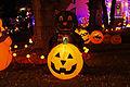 Jack-o'-lantern_Black_Cat
