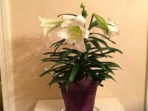 Easter Lily 3