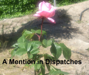 mention in dispatches