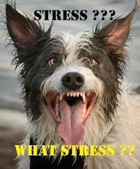 radio stress