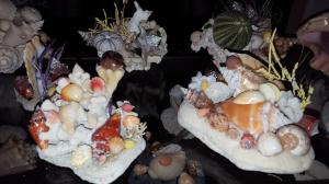 more-shells