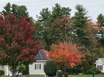 Autumn color orange