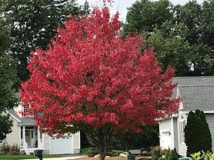 Autumn color red