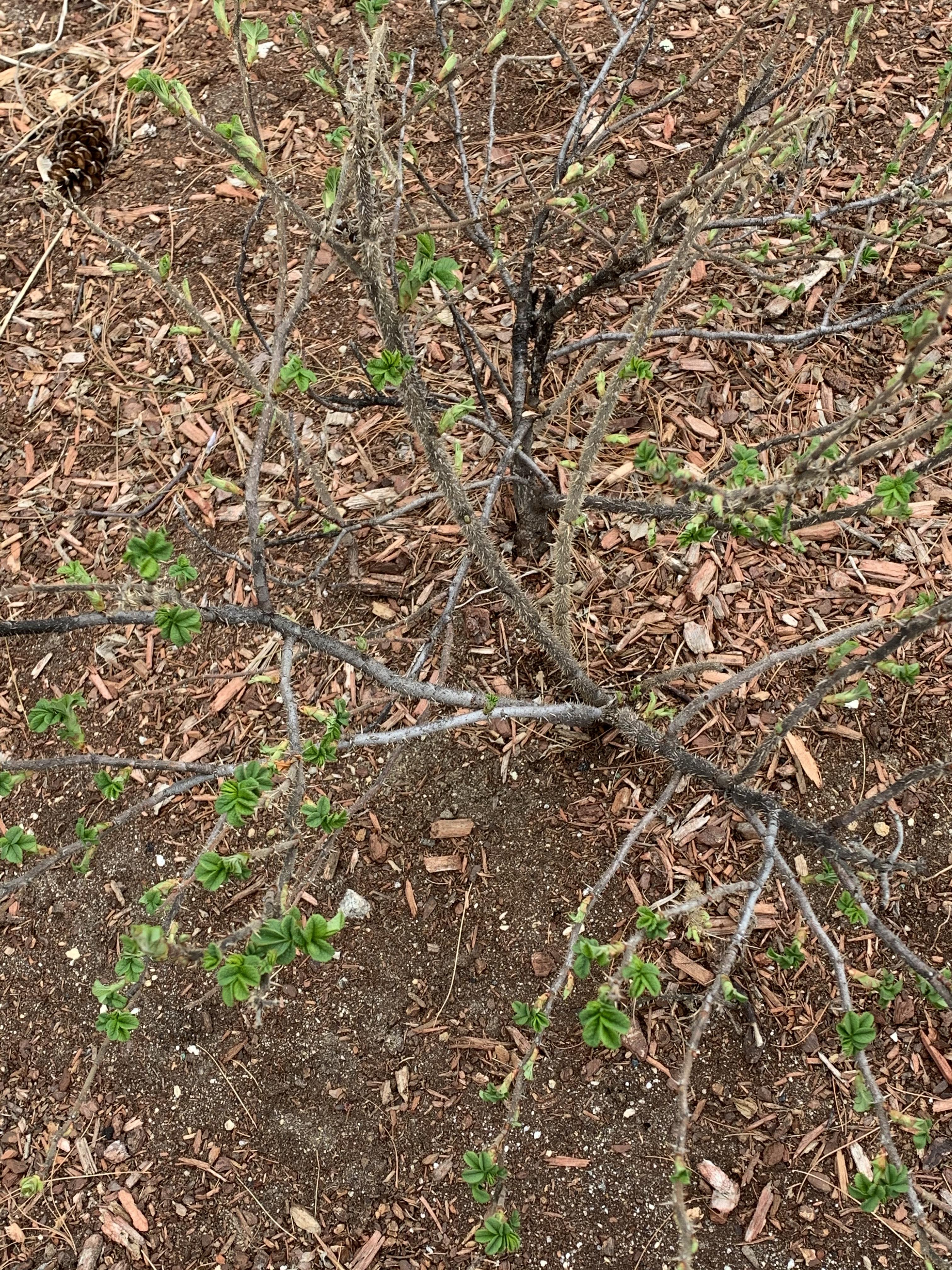 Bushes sproutin